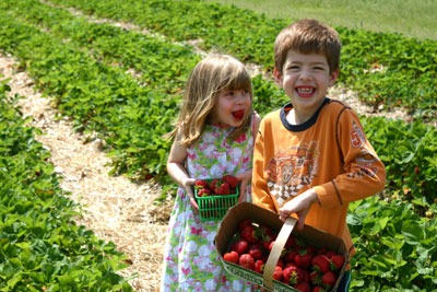 Membership in Benefits of Membership, North American Strawberry Growers Association, United States & Canada, helps farmers learn to grow better, sweeter, juicier strawberries at a better profit.